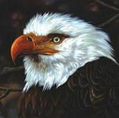 Mogwai : The Hawk Is Howling