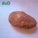 Dud : Potato