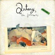 Antony And The Johnsons : Swanlights