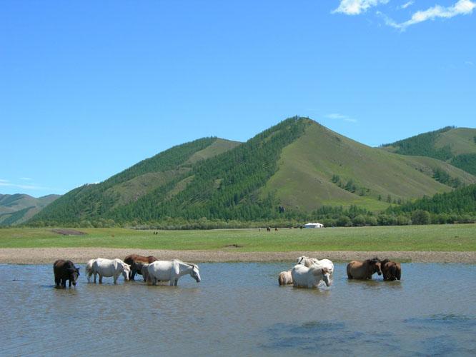 Mongolie : Carnets de voyage  en concert