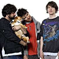 Animal Collective en concert