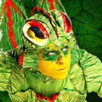 Cirque du Soleil - OVO en concert