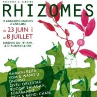 Festival Rhizomes